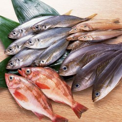 fresh-fishes
